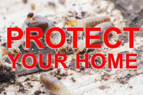 termites-text